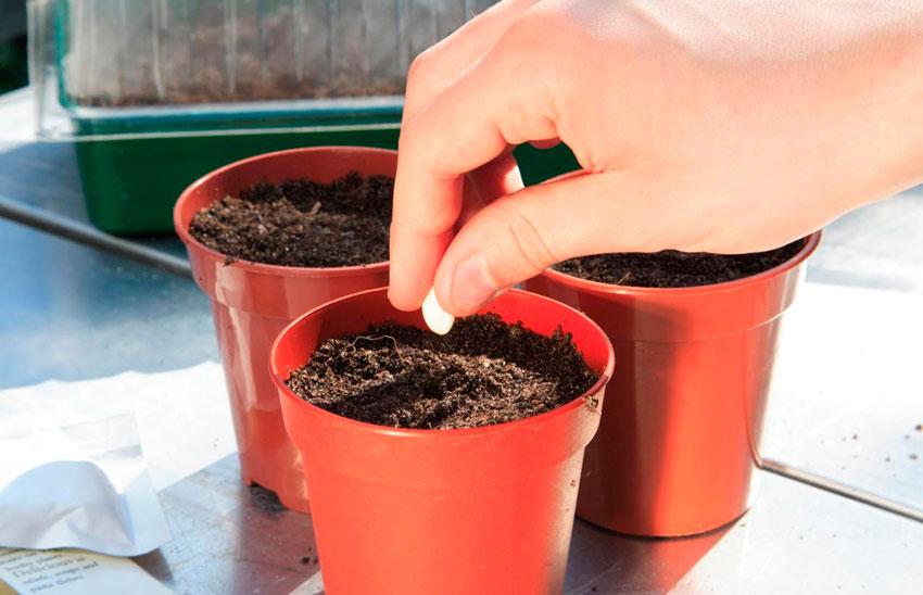 Когда сажать семена комнатных цветов 119