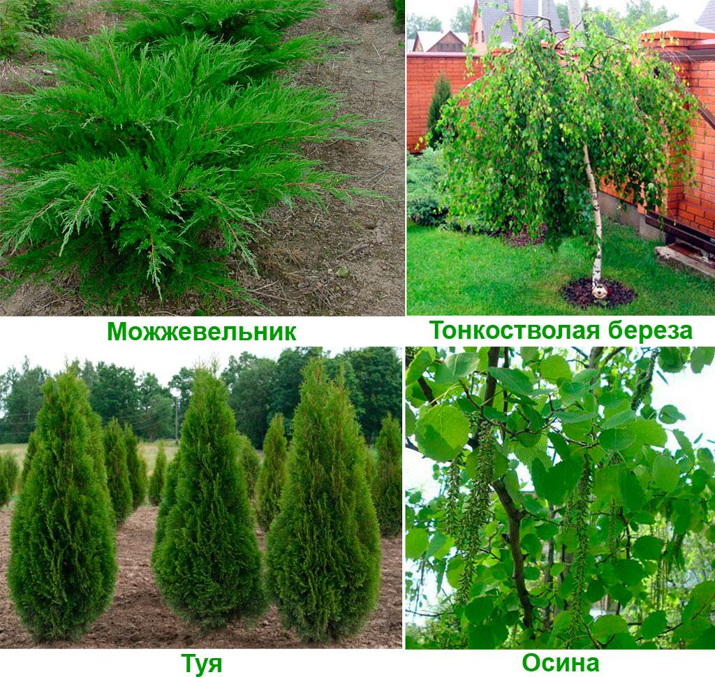 Какие растения лучше сажать на кладбище