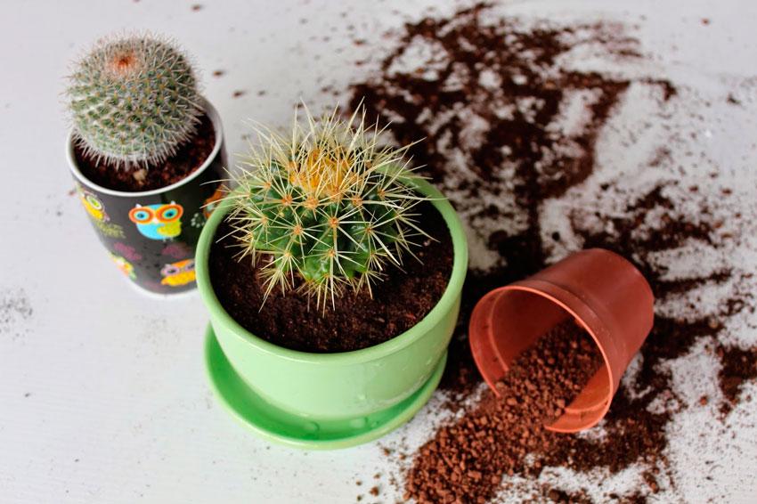 В какой грунт сажать кактусы