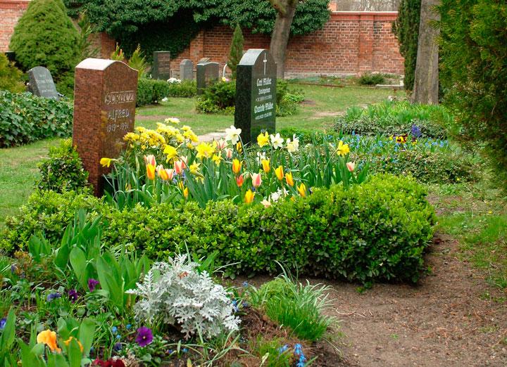 Какие растения сажают на кладбище фото 10