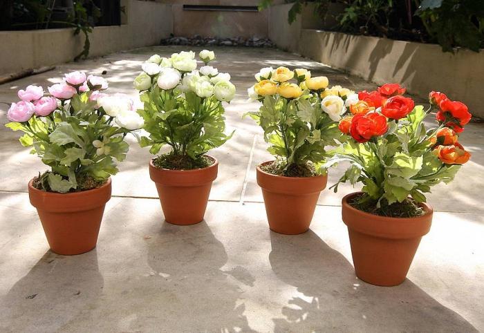 Цветы в горшках и уход